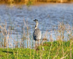 Национальный парк Доньяна