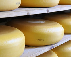 Сыра Голландии