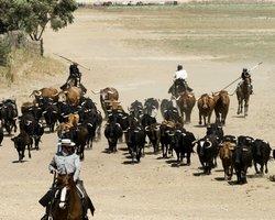 Ферма по выращиванию быков