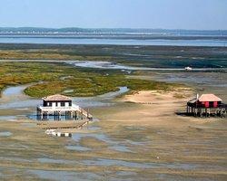 Дома на сваях в Аркашоне на Птичьем острове