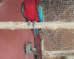 Экскурсия в Парк Птиц и попугаев от Туроператора НИКА