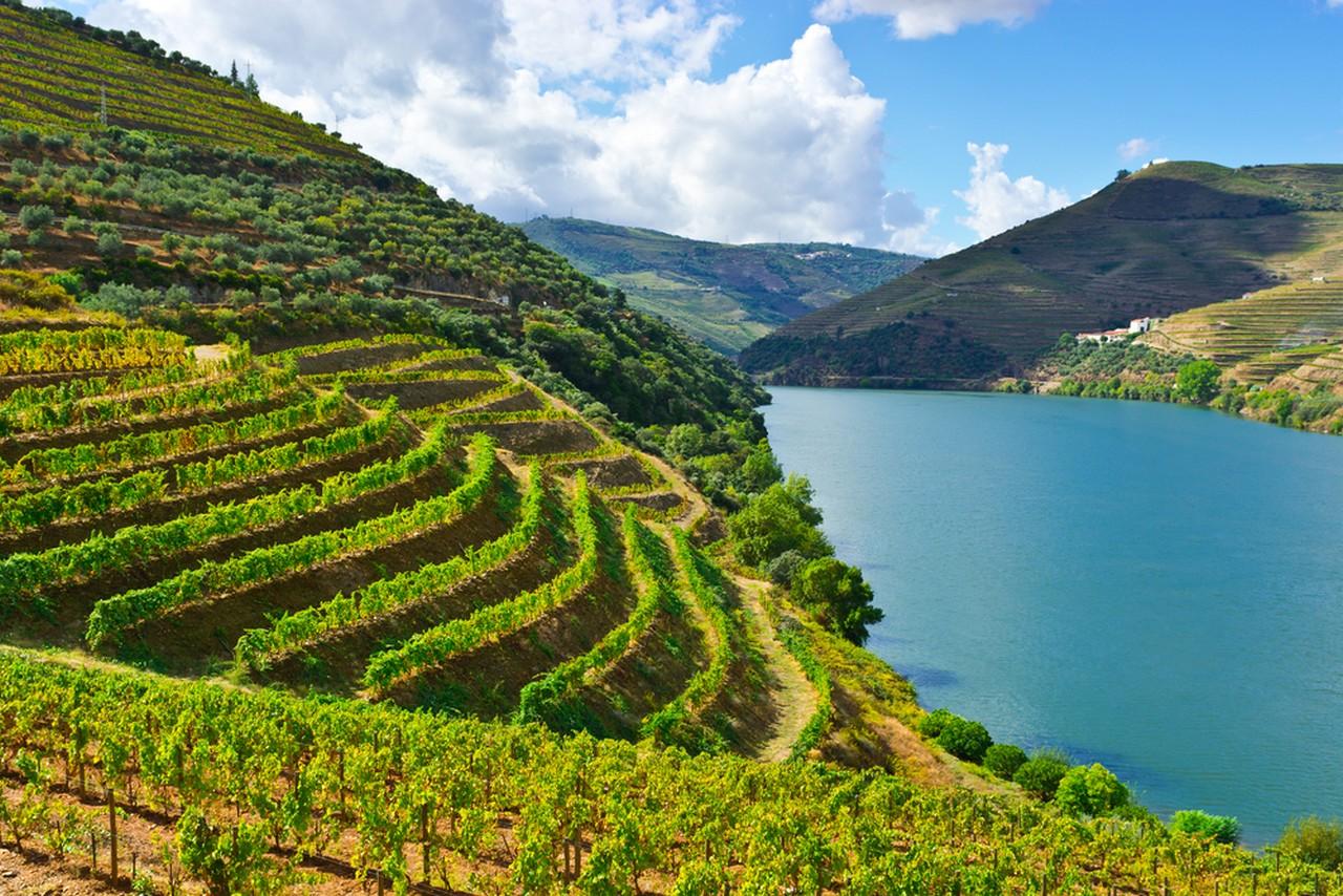 Виноградники на берегах Дору