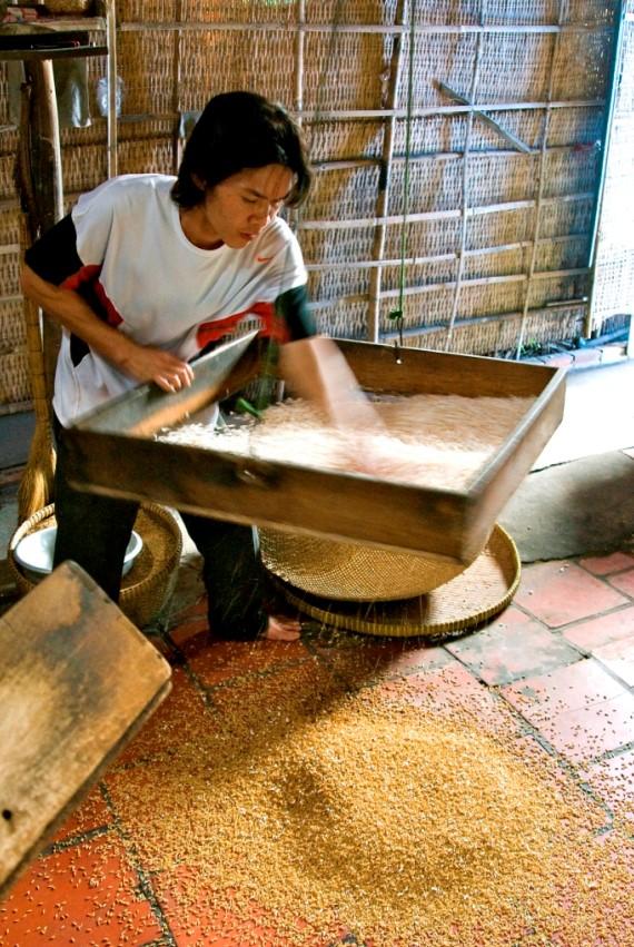 Обработка риса