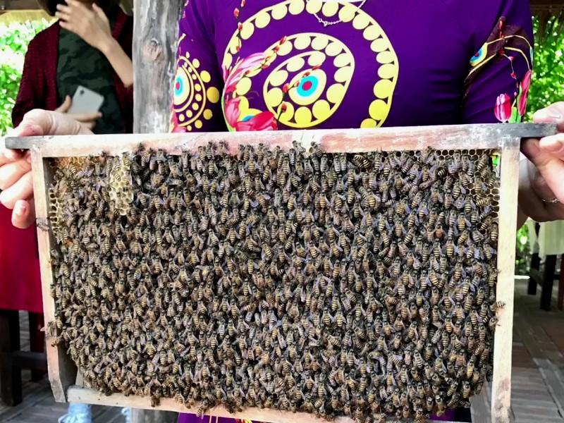 Пчеловодческая ферма.