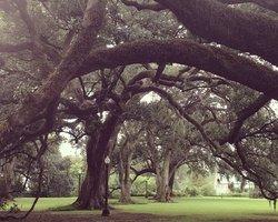 Дубовые Аллеи. Новый Орлеан