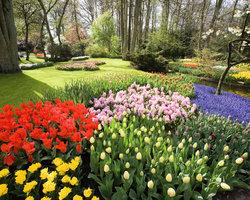 Парк цветов Кейкенхоф