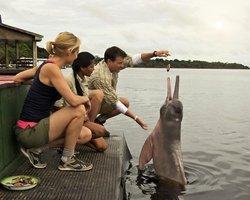 Знакомство с розовыми дельфинами